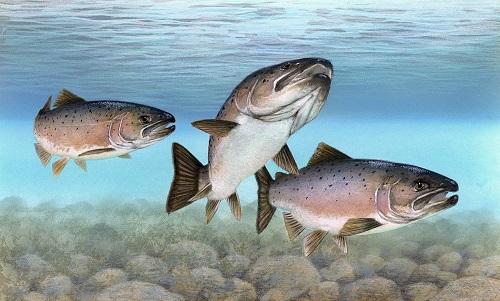 Рыба-польза и вред