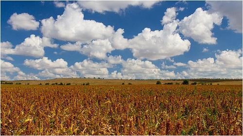 Зерновые злаковые культуры