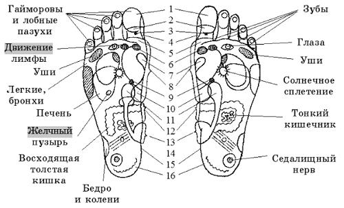 Биологически активные точки на ступнях ног